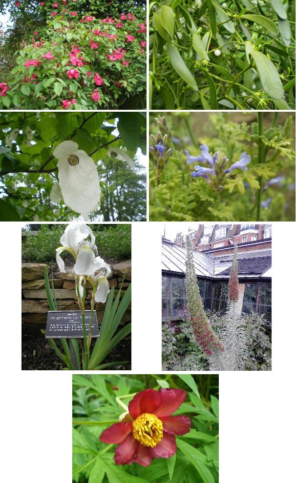 flowers herbs chelsea physic garden