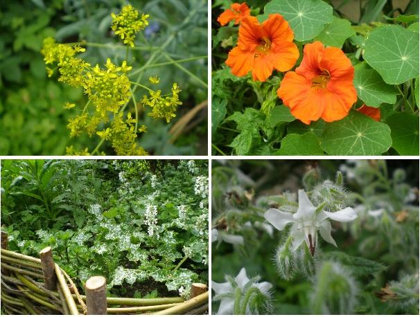 herb garden plants