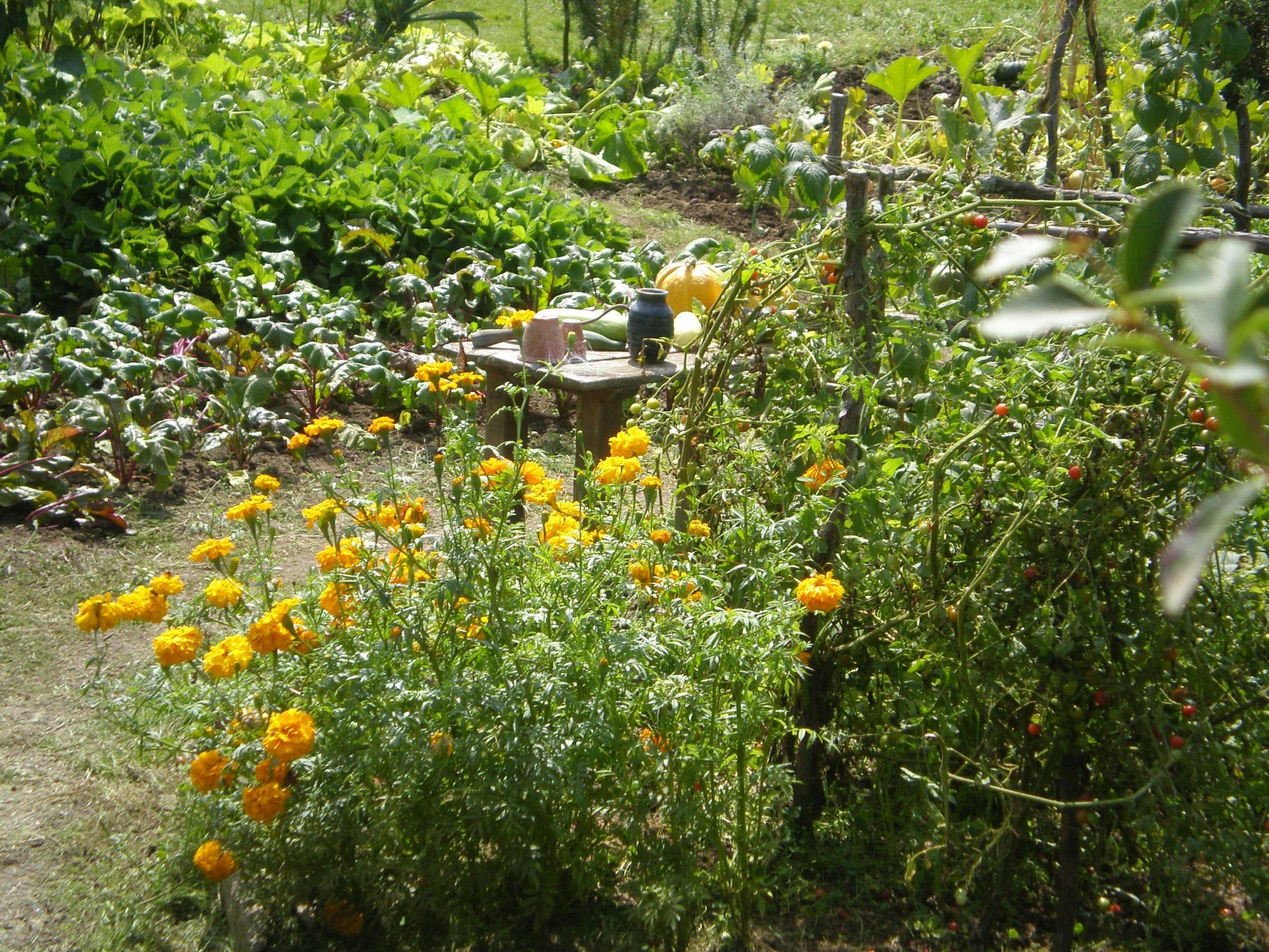 vegetable gardening Hobbiton