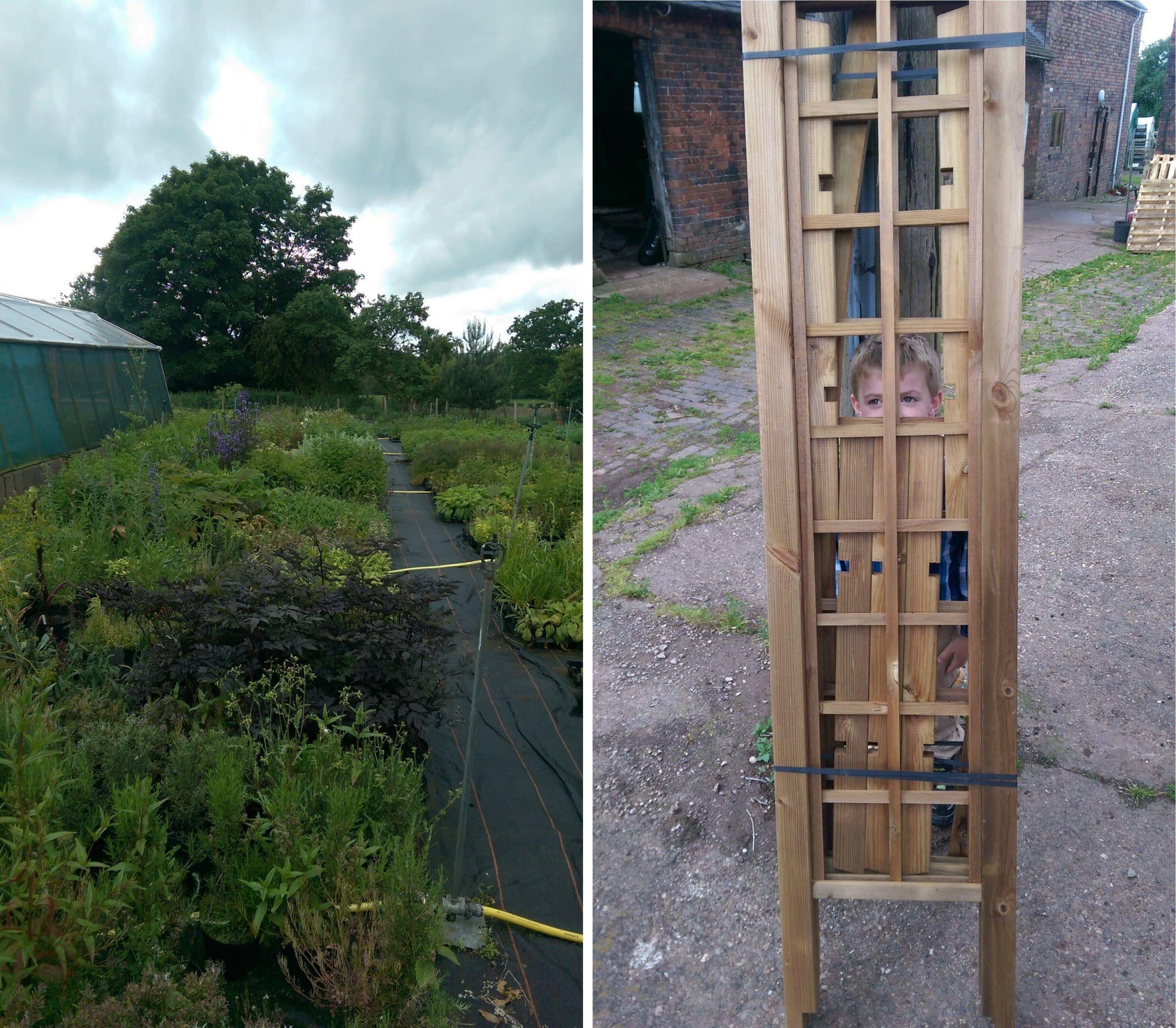 herbs growing hooksgreen nursery